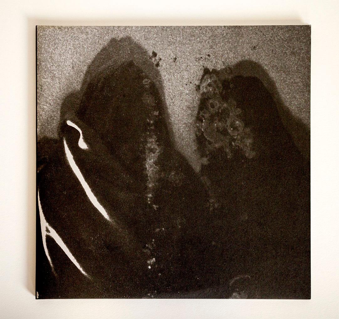 Fluisteraars – 2 copy